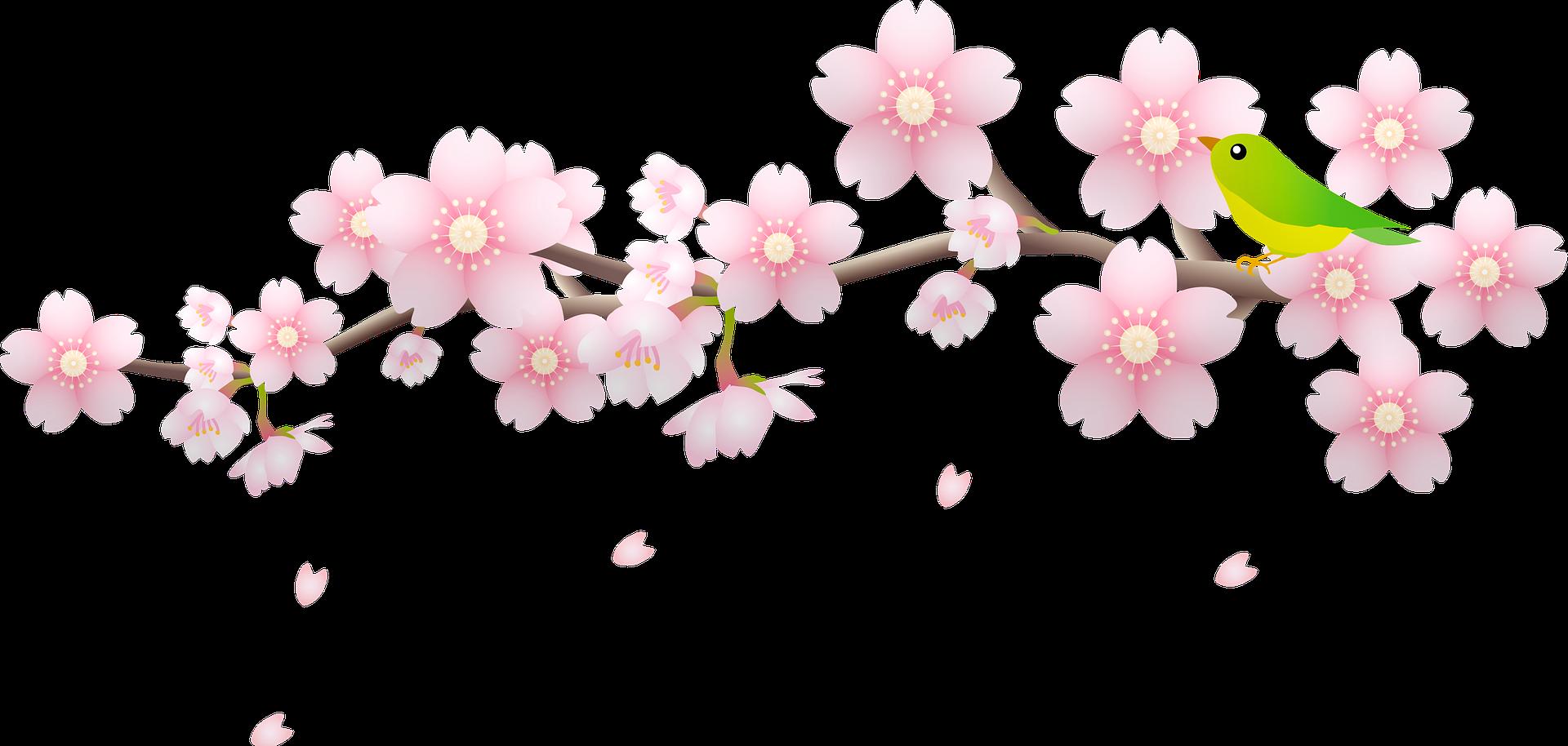 cherry-blossom-6008186_1920